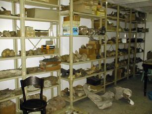 Departamento de Paleontología