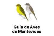 Guía de aves de Montevideo