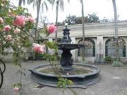 Fuente y rosales
