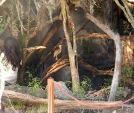 "Sector del Diorama ""refugio"", donde se observan murciélagos"
